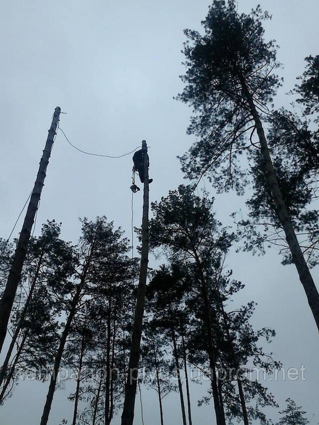 Спил деревьев частями с помощью арбористов