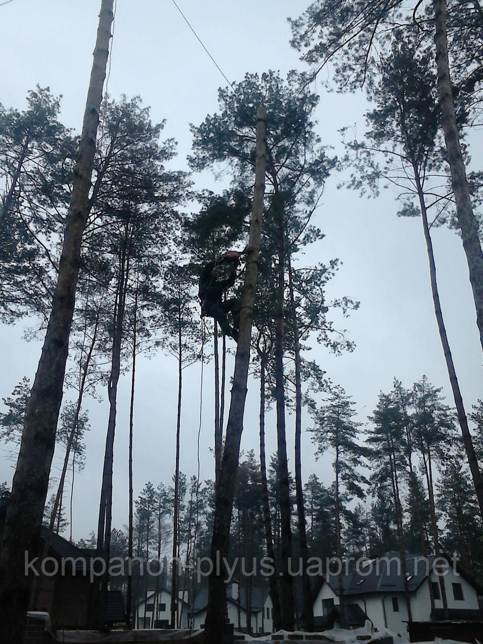 Расчистка участка от деревьев под строительство.
