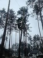 Расчистка участка от деревьев под строительство., фото 1