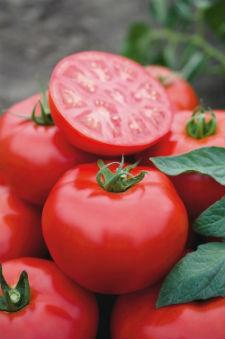 Семена помидора Томск F1  1000шт семян детерминантный