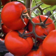 Семена помидора Тобольск F1  250 семян индетерминантный