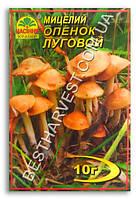 Мицелий «Опенок Луговой» 10 г