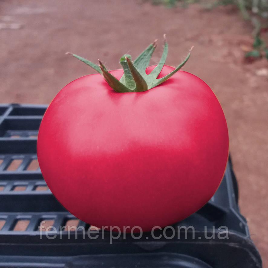 Насіння томату Пінк Кристал F1 \ Pink Kristal 250 насінин