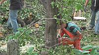 Срубить дерево Срезать дерево цена, фото 1