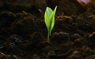 Мікродобрива та стимулятори росту