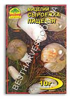Мицелий «Сыроежка пищевая» 10 г