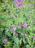 Семена травы Люцерны Verco (1кг)