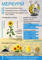 Семена подсолнечника МЕРКУРІЙ стандарт