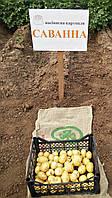 Картофель семенной Саванна, среднеспелый 1 репродукция