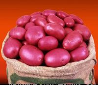 Картофель семенной Кристина, ранний 2 репродукция