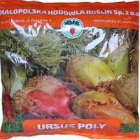 """Семена свеклы  """"Урсус Поли"""" желтая  (0.5кг)"""