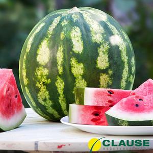 Арбуза Кримсон Свит семена/Clause (10 кг) — среднеранний сорт с округлыми полосатыми плодами