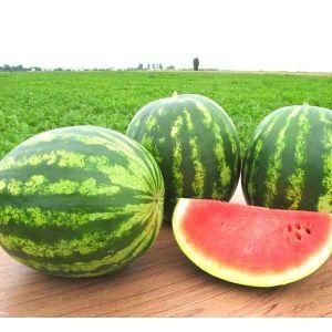 Семена арбуза Топ Ган F1 (Syngenta/ АГРОПАК+) 50 семян - (58-62 дня), овальный, ОЧЕНЬ СЛАДКИЙ!!! вес 8-10 кг