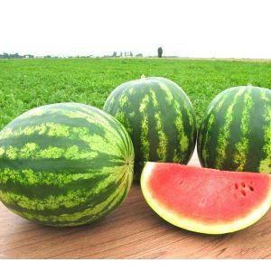 Семена арбуза Топ Ган F1 (Syngenta/ АГРОПАК+) 50 семян - (58-62 дня), овальный, ОЧЕНЬ СЛАДКИЙ!!! вес 8-10 кг, фото 2