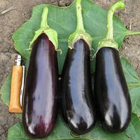 Семена баклажана Фабина F1 50 г (Clause) — ранний (70-75 дней), фиолетовый, цилиндрический