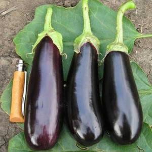Семена баклажана Фабина F1 50 г (Clause) — ранний (70-75 дней), фиолетовый, цилиндрический, фото 2