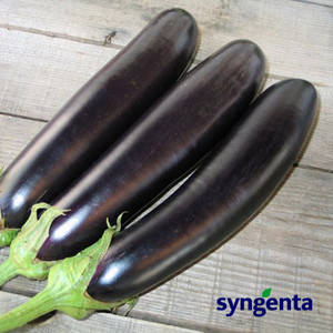 Семена баклажана Миледа F1 (Syngenta/ АГРОПАК+) 100 сем — ранний (75 дн), фиолетовый, вытянуто-цилиндрический, фото 2