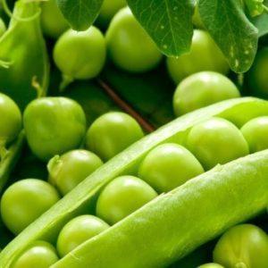 Семена гороха Джоф (Syngenta) 100000 семян/100 тыс. сем — (90-100 дней), поздний, крупнозернистый, овощной