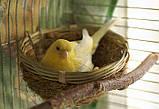 """Гнездо для канарейки """"Комфорт"""" 7*12см, фото 2"""