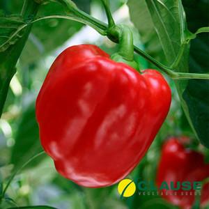 Семена перца Карисма F1 (Clause) 1000 семян — ранний (70 дней), кубовидный, красный, сладкий