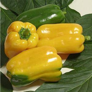 Семена перца Джемини F1 (Nunhems/САДЫБА ЦЕНТР) 8 семян — ранний (75 дн), кубовидно-удлинен, желтый, сладкий