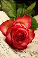 Алмазная вышивка 30х40 см, роза