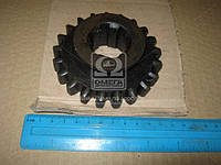 Шестерня коробки отбора мощности ведомая внутреняя 21зуб.  МАЗ (самосвал) производство Украина (арт. 503-4202064-Б), AEHZX