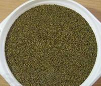 Семена люцерны посевной магниченая