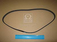Ремень поликлиновый 4PK970 (производство DONGIL) (арт. 4PK970), AAHZX
