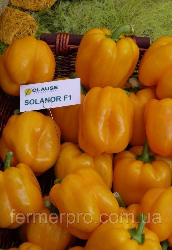 Семена перца  Соланор F1 \ Solanor F1 1000 семян Clause