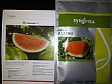 Семена арбуза ВДЛ5003 (Арашан) F1, 1000 семян, фото 2