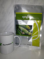 Семена кабачка Ангелина F1 / Аnhelina F1, 500 семян, фото 1