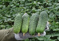 Семена огурца Регал F1 \ Regal F1 0.5 кг Clause