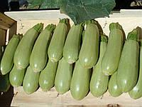 Семена кабачка Асма F1 \ Asma F1 500 семян Clause