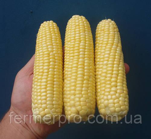 Семена кукурузы Леженд F1 / Legend F1 10 кг Clause