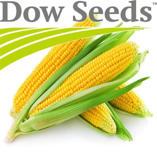 Гибрид кукурузы ДС1071С Dow Seeds