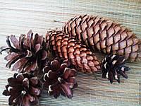 """Набор """"Лесные шишки"""" (шишки натуральные: сосновые 50 штук+ 50 штук еловые)"""