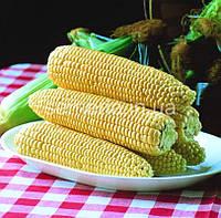 """Насіння Кукурудза Спіріт F1 0,5 кг. """"Проф. насіння"""""""