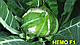 Семена капусты цветной Немо F1 \ Nemo F1  2500 семян Clause, фото 2