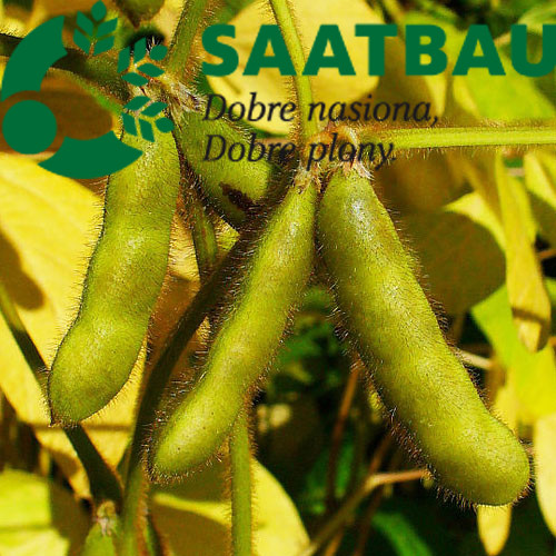 Семена сои сорт Кардифф селекция Saatbau