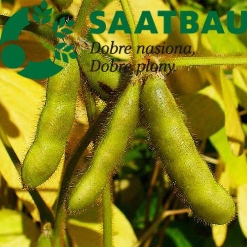 Семена сои сорт Кордоба семена Saatbau