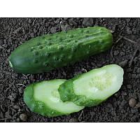 Семена Огурец Калипсо (10г)