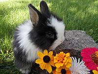 Мини кролики для всей семьи