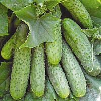 Семена огурца Маша F1 (Masha F1) 250 сем., партенокарпического (самоопыляемого)