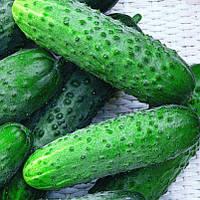 Семена огурца партенокарпического (самоопыляемого) Мирабелл F1 (Mirabelle F1) 1 000 сем.