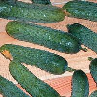 Семена огурца партенокарпического (самоопыляемого) Меренга F1 (Merengue F1) 1 000 сем.