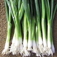 Семена лука Байа верде (Baja verde) 100 000 сем., на перо