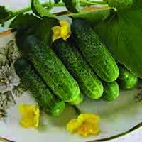 Семена огурца Надежда F1 (Nadezhda mix) 1 000 сем., женского типа цветения
