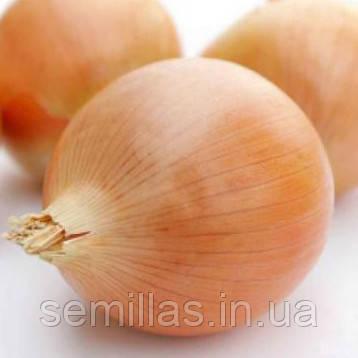 Семена лука Кэнди F1 (Candy F1) 250 000 сем., репчатого