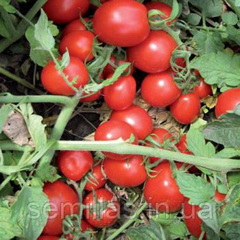 Семена томата Перфектпил F1  (Perfectpeel F1) 25 000 сем., для переработки